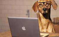Tech Doggo
